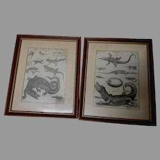 Fine Pair Circa 1789 Engravings, Reptiles, Lizard, Alligator