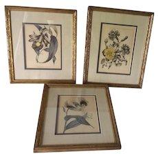 Vintage Botanical Prints, Hand Colored, Lovely Frames