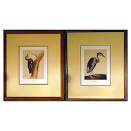 Vintage Pair Reproduction Bird Prints by Charles Collins