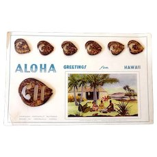 Vintage Carved Hawaiian Cocoanut Buckle & 6 Buttons on Original Card
