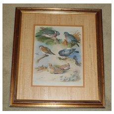 Vintage Framed Bird  Print