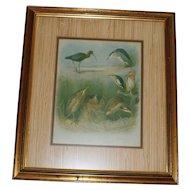 Vintage Framed Print of Sea Birds