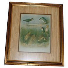 Vintage Framed Print of Sea Birds