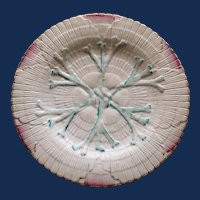 Antique American Majolica Griffen, Smith, & Hill Etruscan Albino Shell & Seaweed Plate