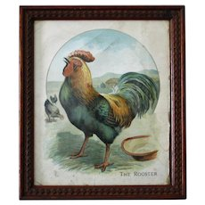 Antique Rooster Print, Framed