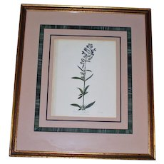 c. 1860 Antique Botanic Print of Entire-Leaved Scullcap, Beautifully Framed