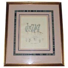 Antique Botanic Framed Print of Thymus serpyllum