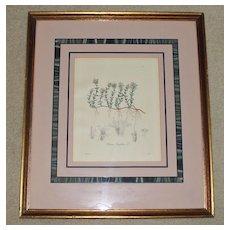 Antique Framed Botanic Print of Thymus Serpyllum or Wild Thyme