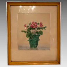 Watercolor painting depicting a pink Primula, signed and dated 1933