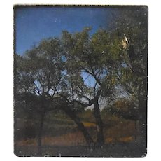 Vintage Kodak 3D Stereo Slide View - Tree Scene Circa 1950