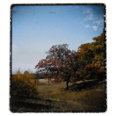Vintage Kodak 3D Stereo Slide View - Maple Tree In Fall - Circa 1950