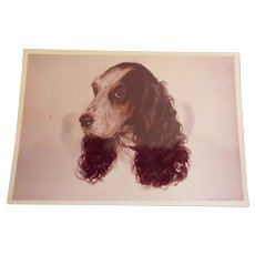 Vintage Photograph of a Portrait Painting of a Dog - English Springer Spaniel