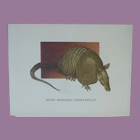 Armadillo - Vintage Animal Print By Mary Lee Baker From Strange Animals Series