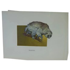 Potto -Vintage Animal Print By Mary Lee Baker From The Strange Animals Series