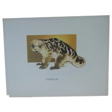 Cuscus - Vintage Animal Print By Mary Lee Baker From Strange Animals Series