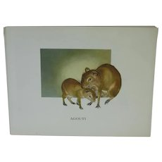 Agouti - Vintage Animal Print By Mary Lee Baker From Strange Animals Series