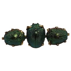 Victorian scarab beetle pin three genuine bugs