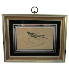 Hand Colored Framed Bird Print
