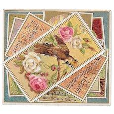 Allen & Ginter Birds of America Tobacco Cigarette Card Cuckoo Bird c1888