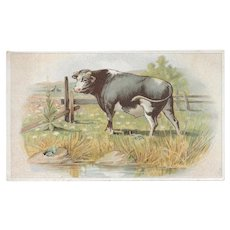 Lion Coffee The Frogs and the Bull Victorian Advertising Trade Picture Card