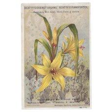 Beatty's Beethoven Organ Easter Lily Victorian Trade Card Pianofortes Washington New Jersey