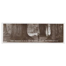 Real Photo Postcard Bookmark Stanley Park Trees Vancouver, BC Canada RPPC Imprime England
