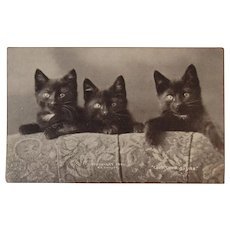 c1900 Black Cats Postcard by Bullard Perfect for Halloween Kitty Kitties Sheahan Cat Postals