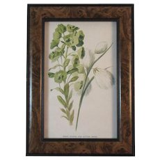 Framed Hulme Wildflowers Print Wood Spurge and Cotton Grass