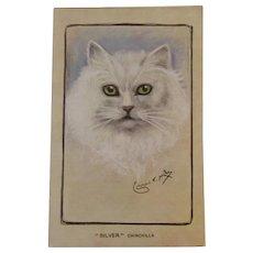 Artist Signed Chinchilla Cat Postcard