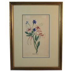 Hand Colored American Woodbine Lithograph
