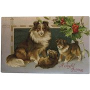 Collie Sheltie Dog Family Christmas Postcard Shetland Sheep Dogs Puppy Puppies Embossed Unused