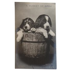 1906 A Bucket of Bark Rotograph Puppy Dogs Puppies Postcard Unused