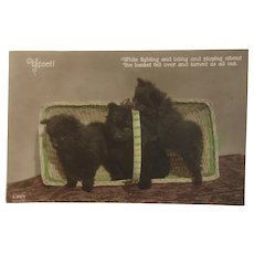 Real Photo Postcard Puppy Dogs in a Basket Titled Upset!