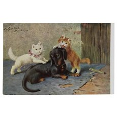 German Kitty Cats and Dog Postcard Unused