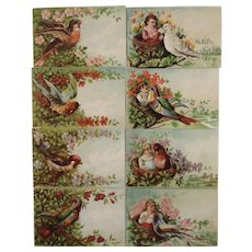 8 Bird Flower and Children Victorian Calling or Trade Cards