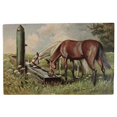 German Horse Postcard Horses Drinking Water at the Pump Trough Germany