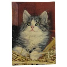 French Squeaker Cat Postcard Vintage