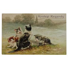 Kitty Cats Drinking from a Tin Embossed Postcard Kindest Regards