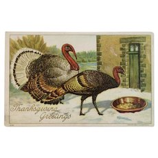 1908 Thanksgiving Postcard Tom Turkey Chocolate Advertising Julius Bien Greenfields Sponge