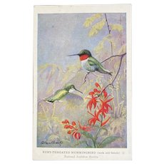 Allen Brooks Ruby-Throated Hummingbird Postcard National Audubon Society Unused Male and Female