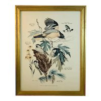 Floral and Fauna Mid-Century Print Arthur Singer Baltimore Oriole Blacked-Capped Chickadee Bird Number 8 in a Series