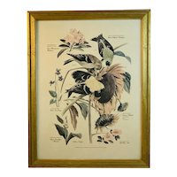 Floral and Fauna Mid-Century Print Arthur Singer Common Goldfinch Willow Goldfinch Bird Number 6 in a Series