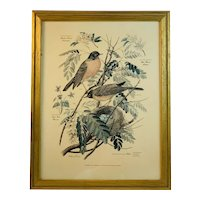Floral and Fauna Mid-Century Print Arthur Singer Robin Bird Number 5 in a Series