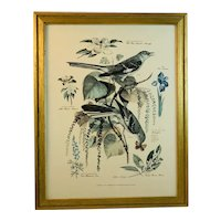 Floral and Fauna Mid-Century Print Arthur Singer Mockingbird Bird Number 4 in a Series