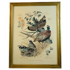 Floral and Fauna Mid-Century Print Arthur Singer Ruffled Gross California Quail Ring Necked Pheasant Birds Number 3 in a Series