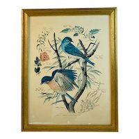 Floral and Fauna Mid-Century Print Arthur Singer Eastern Bluebird Mountain Bluebird Birds Number 2 in a Series