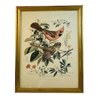 Floral and Fauna Mid-Century Print Arthur Singer Cardinal Bird Number 1 in a Series