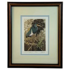 Tricolored Heron Color Etching By David Hunter