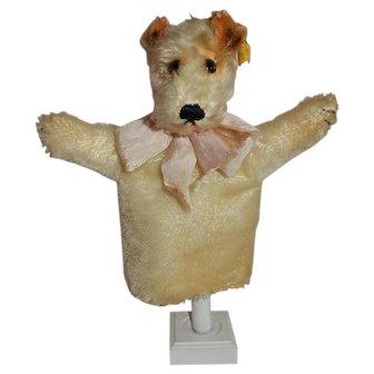 CHARMING 1950's Vintage Steiff Terrier Hand Puppet