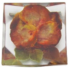 1950's Vintage Embedded Dried Flower Lucite Pin